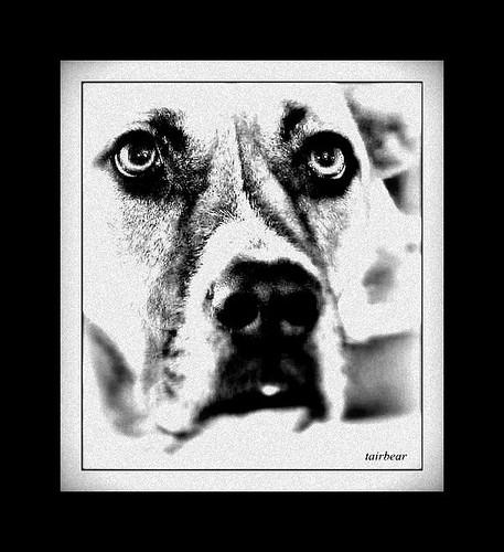 her dog Karma, a portrait