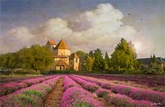 Purple lines (Jean-Michel Priaux) Tags: paysage landscape church abbey line lines purple flowers chapel paint painting paintingmatte paintmapping poetry lavande lavender nature