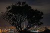 Silhouette and the City (Antony Eley) Tags: city lights night tree silhouette framing skytower
