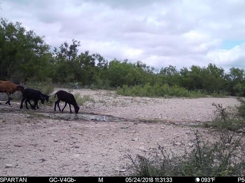 2018-05-24 11:31:33 - Crystal Creek 1