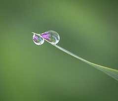 Go your own way. (Omygodtom) Tags: lowlight water macro refraction tamron90mm nature dof d7100 digital 7dwf flora nikon