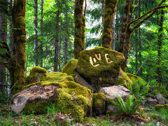 Daily Dose (Matthew James Lewis) Tags: washingtonstate washington rocks trees grass green love moss mapletrees firtrees forest ferns olympicpeninsula olympicnationalforest beauty leaves aldertrees