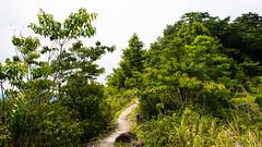 九九峰步道 (briandodotseng59) Tags: asia taiwan green yellow mountain road brown hike nikkor nikon coth5 color nature beautiful landscape