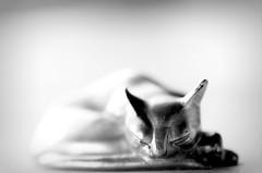Pewter Dreaming (flowrwolf) Tags: 7dwf 7dayswithflickr 7dwfblackandwhite 118picturesin2018 118in2018 monochrome blackandwhite selangorpewtercat pewter ornament macro macrophotography macrophotograph macrolens tokina100mmf28atxprod closeup sleepingcatornament metal tabletopphotography creativetabletopphotography silvercoloured silvertones animal macrosofallsorts macrosofallkinds sundaylights justedutalent sleepingfor118 sleeping flowrwolf