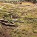 Moss and Root / 苔(こけ)と木の根(きのね)