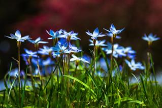 Wildflowers (Winterthur)