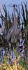 04-28-18-0015012 (Lake Worth) Tags: animal animals bird birds birdwatcher everglades southflorida feathers florida nature outdoor outdoors waterbirds wetlands wildlife wings