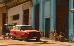 Cuba- La Habana (venturidonatella) Tags: cuba america latinamerica americalatina caraibi caribbean isola lahabana avana lavana street strada streetscene streetlife auto car macchina persone people gentes cane dog
