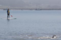 IMG_6503 (armadil) Tags: mavericks beach beaches californiabeaches kathie lowtide seal seals