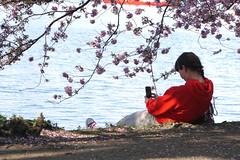 self pleasure (Rosmarie Voegtli) Tags: binnenalster hamburg flowers spring water alster red selfie woman rotrossorougerood