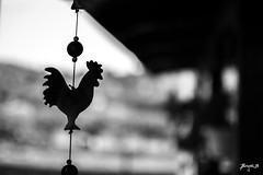 Rooster Wind Chime (Jakesb_001.NEF) Tags: rooster wind backyard background black white blackandwhite yard view road relaxing relax porch air windy clicking ringing storm animal animals plastic decoration art serbia srbija novisad sad paragovo priroda nature naturale nationalpark novi home vojvodina crna bijela bela crno belo bijelo crnobelo crnobijelo crnobijela crnobela bosnia bosna landscape macro blurry blur europe outdoor people sky skyline chime