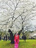 Kimono, sakura, spring (Nueva 7) Tags: geisha highpark cherry sakura kimono
