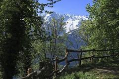 Mayen Lotton (bulbocode909) Tags: valais suisse mayenlotton montagnes nature forêts printemps paysages barrières vert bleu neige arbres fabuleuse