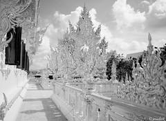 White Temple - Chiang Rai, Thailand (Josadaik Alcântara Marques) Tags: monochrome blackandwhite blancetnoir pretoebranco whitetemple goldmonk goldstatue symbol faith buddhism culture monks architecture religion buddhisttemple monges chiangrai norththailand thailand southeastasia trip travel backpacker photography superb amazin colors buddhistdetails gold goldstatuebuddha destination garden postcard wallpaper watrongkhun