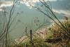 ºº a riVer scene ºº (m+m+t) Tags: dscf557312 mmt meredithbibersteindesign newzealand hawkesbay clive haumoana autumn river water fujixt1 fujixseries fujimirrorless 1855mm natuer outdoors northisland