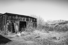 Sonora Junction, Mono County, California (paccode) Tags: solemn california d850 forgotten landscape monochrome barn abandoned bushes fence blackwhite creepy hills scary quiet mountain coleville unitedstates us