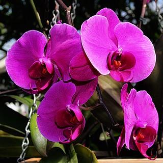 Toronto Ontario ~ Canada ~ Allan Gardens ~ Landmark Site ~ Historical Allan Gardens Conservatory ~ Orchids