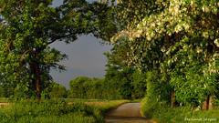 Chemin de la passerelle (fernand.serpol) Tags: belleville passerelle printemps