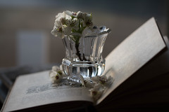 Thoughtful (Captured Heart) Tags: blossoms pearblossoms flowers whiteflowers book bookpages softlight