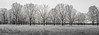 Pano Treeline (Elizabeth_211) Tags: trees nature treeline blackandwhite panorama