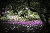 seleger moor-7689 (ver.sus) Tags: selegermoor moor plants rhododendron park pflanzen seleger