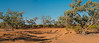 Morning Glory. (Ian M's) Tags: gums outback panorama vsco