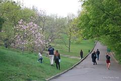 Ботанічний сад імені Гришка Цвітуть магнолії InterNetri  Ukraine 196