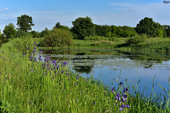 The-meeting-of-spring-and-summer (edgardwahrhaft) Tags: spring summer nature plants lake river water flowers trees park sky