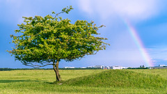 The Tree, the Rainbow, and the Helicopter (redfurwolf) Tags: tree rainbow sky grass landscape cityscape clouds nature outdoor hiking redfurwolf sonyalpha a7riii sony sal2470f28za mallertshoferheide