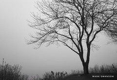 Tree on the Bluff (mswan777) Tags: 1855mm nikkor d5100 nikon stjoseph ansel monochrome blackwhite white black scenic landscape nature outdoor mist fog bluff michigan spring tree solitary