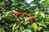 Lipstik fruit (Oleg Nomad) Tags: танзания занзибар джамбиани пляж океан песок облака вода жара tanzania jambiani ocean indian beach sand water africa travel