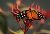 Schmetterling / butterfly (Stefan Schlegel Photography) Tags: sony burgerszoo arnheim schmetterlinge schmetterling butterflie sony77ii