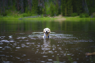 Come on in, the water's fine