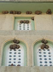 kırlangıç yuvaları / üreğil camisi