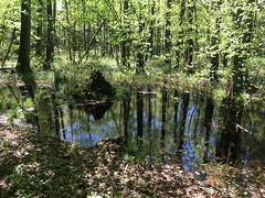 Mazury (basiamarcisz) Tags: przyroda nature natura zieleń green trees drzewa forest las masurian mazury