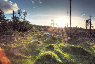 128/365 - the dead forest