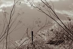 ºº a riVer scene ºº (m+m+t) Tags: dscf557313 mmt meredithbibersteindesign newzealand hawkesbay clive haumoana autumn river water fujixt1 fujixseries fujimirrorless 1855mm natuer outdoors northisland
