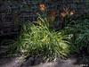 ... (Jean S..) Tags: park garden flowers green orange bloom blooming shadow sun ray