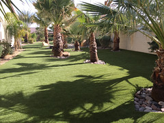 Gorgeous, Dog Friendly Backyard in Indigo, California by ForeverLawn Pacific Coast (ForeverLawn) Tags: flcontest2018 foreverlawnpacificcoast k9grassbyforeverlawn k9grass k9grassclassic greatdanes california calidogs californiahomes socal dogfriendly backyards dreambackyard foreverlawn residentiallandscapes transformation dreamyards