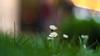 Voigtländer Nokton Classic SC 40 mm f/ 1.4 - DSCF0467 (::nicolas ferrand simonnot::) Tags: voigtländer nokton classic sc 40 mm f 14 2010s | 10 blades aperture leica m paris 2018 prime lens profondeur de champ effet macro bois arbre flou bokeh depth field color night public light rose green yellow orange blue red pink purple vintage manual ciel german fleur