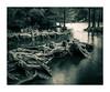Riverbank (pawelrkrk) Tags: blackandwhite nikon nikond300 roots trees river riverbank reflections water island landscape