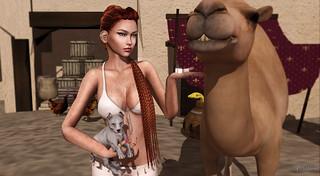 No sóc camell, sóc dromedari