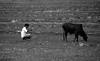 Dont Dare to Escape (Genius Wizard) Tags: bhuwanhills india assam cachar barakvalley northeastindia fields farm cow boy grazing