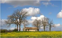La carte postale (chriskatsie) Tags: garonne tonneins hill colline colza rapeseed field champ nature landscape paysage eglise chapelle church arbre tree ciel sky nuage cloud lumiere light