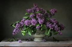 still life with lilac (*LiliAnn*) Tags: stilllife lilac