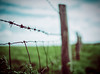 Enclosed (iratebadger) Tags: nikon nikond7100 d7100 fence barbed barbedwire wire wooden posts woodenposts fencedfriday blur bokeh green field grass focus outoffocus outside countryside rural shadows light perspective iratebadger