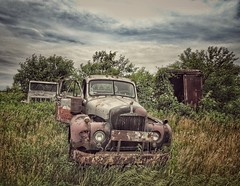 watch out for the bulldog...(HTT) (BillsExplorations) Tags: mack macktruck bulldog abandoned decay forgotten salvage ruraldecay rust truckthursday abandonedtruck old vintage field grass internationaltruck freighthauler
