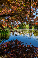 VanDusen Botanical Garden-89 (_futurelandscapes_) Tags: vandusen botanical garden spring vancouver bc canada green flowers rhododendrons japanese maple trees water reflection fountain beautiful peaceful relaxing nature landscape beauty natural sunny