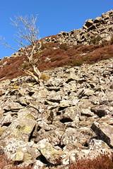 fox earths crag (kokoschka's doll) Tags: crag boulders tree bank hill pennines teesdale