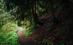 From Dark to Light (John Westrock) Tags: nature trees forest light dark trail path carnation washington pacificnorthwest canoneos5dmarkiii sigma35mmf14dghsmart